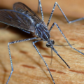 Global MICE venues and organisers assessing Zika threat