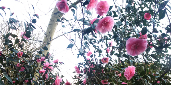 Flowers-CNEW